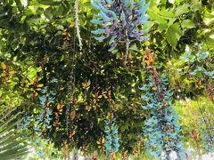 グアテマラの鮮やかな彩り