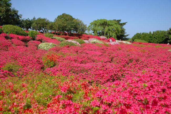 ひとりお花見部 伊東の小室山公園でつつじのお花見 サンハトヤに泊まりたくて行った旅