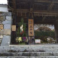新春京都、足を伸ばして醍醐寺と大原の旅