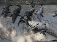 トレローニ ジャマイカ・スワンプ・サファリ・ビレッジ (Jamaica Swamp Safari Village, Trelawny)