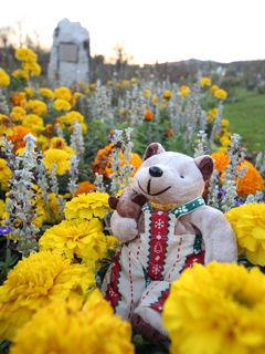 今度こそ癒されたい! バーデン&ザルツブルクひとり旅(3)バーデンはバラの季節に来たかった