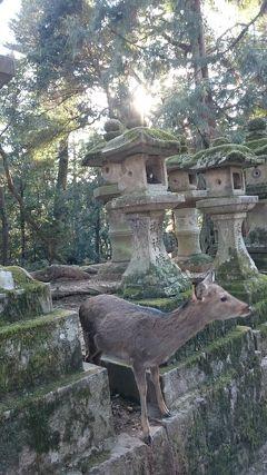 201901,北海道の冬休みは長い,広島,奈良,大阪の旅(5) 奈良,鹿に襲われるムスメ,