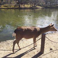 そうだ、奈良に行こう。