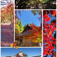 鶏足寺紅葉まだ早かった…太郎坊宮の絶景と、季節違いのひまわり