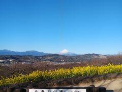吾妻山公園菜の花と富士山眺望