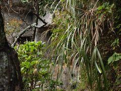 鎌倉・浄光明寺客殿の裏庭