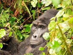 ウガンダ・マウンテンゴリラに会いに行く旅3(ムブロ湖国立公園~ブウィンディ国立公園)