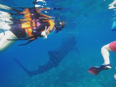ジンベイザメと泳ぐinセブ島弾丸旅行2泊4日☆3日目