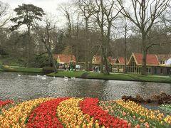 チューリップで癒されるinオランダ