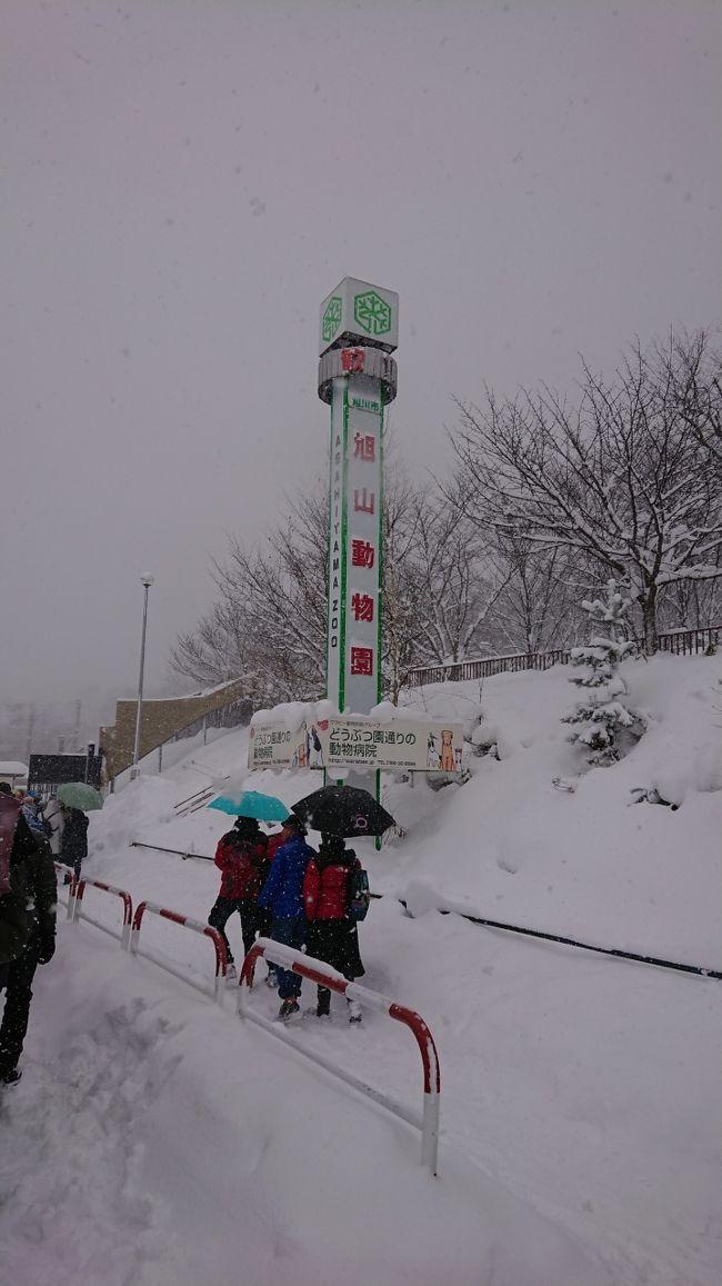 冬の北海道旅行二日目<br />この日は旭川に移動して旭山動物園に行きました。