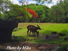 ハワイで過ごす結婚記念日⑩ 3日目☆海を見ながら朝食ビュッフェ~ホノルル動物園でまったり過ごす午前