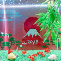 2018 HAPPY NEW YEAR 2019!はじめての元旦旅行!壱岐・福岡・別府へ温泉三昧の一人旅~別府編