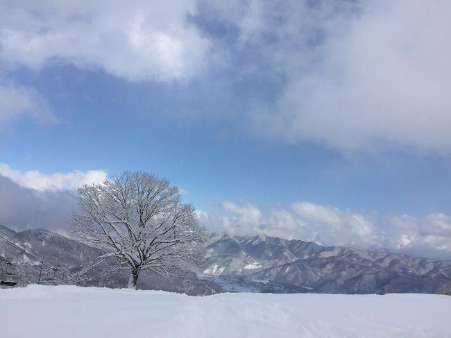 先週の八方尾根にて、にぃにがSAJジュニア2級を取得したことで、弟のかーぽんも発奮。<br />またスキーに行きたいと言い出し、それににぃにも便乗して二人で連呼。<br />お前ら、スキーの前にいろいろすることあるだろ!