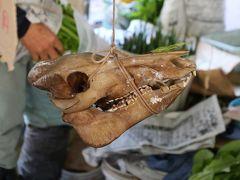 土佐の高知の日曜市にゃ~ 猪の髑髏が売られよる よさこい よさこい