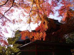 紅葉ハイキングと、聖獣い~っぱいっ!薬王院 in 高尾山