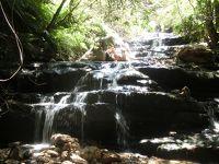 2019新春 シドニー05:世界遺産ブルーマウンテンズ ルーラの森と滝