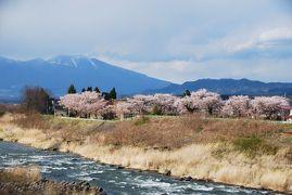 ひとりお花見部 ゴールデンウィークに長野県小諸市と佐久市でお花見