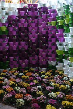 春爛漫のオランダ&ベルギー【7】アンネハウス&10年に1度の世界園芸博覧会フロリアーデへ