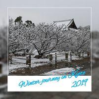 第53回 京の冬の旅  2019年 1月と3月