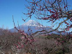 富士緑道から岩本山に