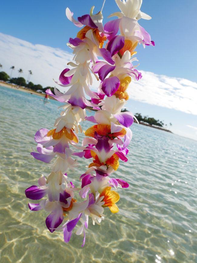 ハワイ島コナで1週間、オアフ島ワイキキで1週間、計2週間英語のプチ短期留学をしてきました!<br />期間が短いので英会話力のアップというよりは英語に慣れ、留学の雰囲気を感じるくらいで終わってしまいましたが、充実した最高の時間を過ごしてくることができました。<br /><br />きちんとした旅行記は後程書くこととして(たぶん書くと思います…)、何気ない街の風景や思い出に残るツアー・体験の写真をまとめます。<br /><br />こちらはオアフ島前編。<br />ホテルに滞在し、平日の午前中は学校で英会話の練習、午後は自由に過ごしていました。<br />土日は終日フリーなので、ツアーを申し込んでオアフ島を満喫しました。<br /><br />フリータイムに撮ったオアフ島ワイキキやノースショアの写真が満載です。<br />枚数が多いのと、コラージュのやり方を覚えたのとでコラージュばっかりしてます。。<br /><br />2019.1.06-12 ハワイ島コナ編 https://4travel.jp/travelogue/11449081<br />★2019.1.12-15 オアフ島前編<br />2019.1.16-21 オアフ島後編   <br />https://4travel.jp/travelogue/11450490<br />1ドルは110-112円程度>