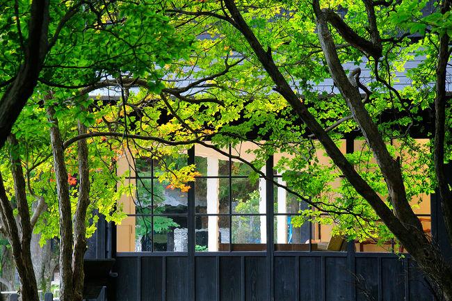 日光中禅寺湖<br />東南の湖畔・立木観音から半月峠へ向かう道沿いに<br />古くから各国大使館の別荘が在ります。<br />それは別荘やリゾートで有名な軽井沢より前<br />日本に別荘文化が初めて伝わった場所。<br />そしてフライフィッシングなど洋式釣りの発祥の地でもあります。<br />数年前その大元とも云えるイギリス大使館別荘が<br />栃木県に払い下げられ修復し公開されましたので<br />今までは遠目で眺めるだけだったイギリス大使館別荘へ行ってみました。<br />