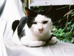 たぶん初めての猫旅 江ノ島へ。