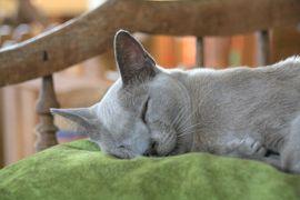 ミャンマー 黄金の三角形の旅 4 インレー湖ボートツアー午後 ビルマ猫の猫カフェ、そしてインデイン遺跡