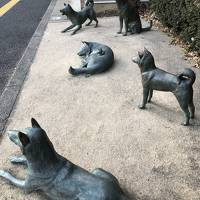 東京中野区 警察病院周辺を歩いてみた。