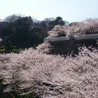 思いがけず桜満開の金沢の春