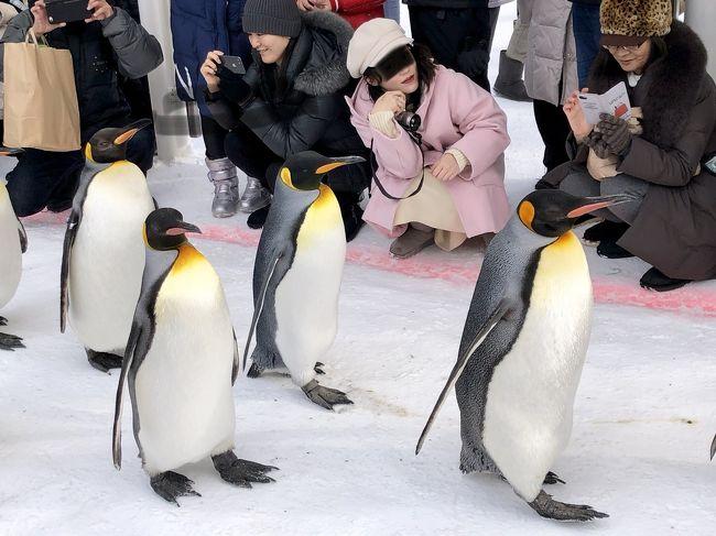 AIRDO無料航空券で旭川へ (一人旅) DAY2その1 今回の唯一のミッション☆旭山動物園のペンギンのお散歩を鑑賞するよ!動画あり