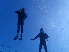 ウミガメに会えた宮古島旅行