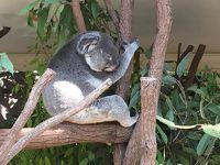 シニアの母と行くオーストラリア8日間 6日目