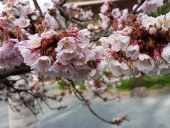 マダムの宗像散歩~花と美食探訪~