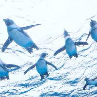 空飛ぶペンギンと〜っても可愛い〜♪