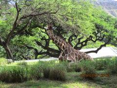 ハワイで子供と楽しむスポット・・・ホノルル動物園へ行ってみました