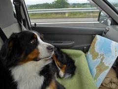大型犬との旅の仕方 その2