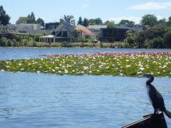 水鳥や睡蓮の楽園ロトロア湖とハミルトンの街を散策(オセアニア周遊旅行)