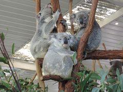 ローンパインコアラパークでコアラを抱っこ