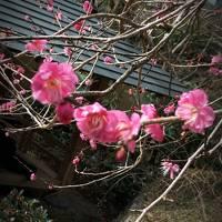 熱海ふれあい旅行…来宮神社 熱海梅園を訪れて…ひとり旅編!