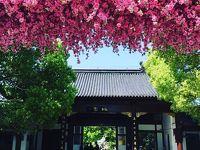 オバサンひとり旅 上海郊外で桃のお花見