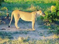 マサイマラ国立保護区着いたぞー。ナイロビから8時間以上だぞー。