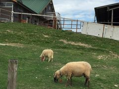 愛知牧場 可愛い動物達とふれあいのひととき