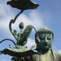 久々のいざ、鎌倉。神社仏閣を巡ろう! 1 鎌倉大仏、といえば・・・