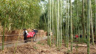 冬の京都1泊2日旅行(兔と猪を巡る旅)2日目