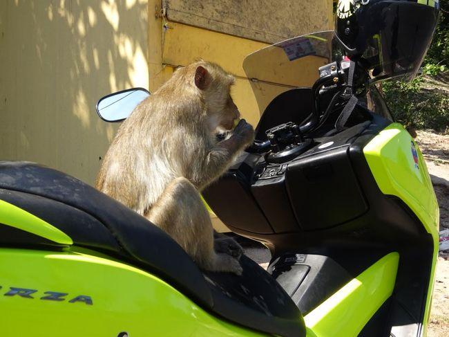 バンコクのお隣チャチュンサオにはサルが普通に生息している山があるのですが、そこでバイクをサルに占拠されてしまいました。