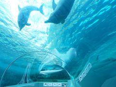 冬の青春18きっぷで1泊2日 太地にクジラに会いに行く(2)太地をサイクリング&クジラ博物館で癒しのひととき