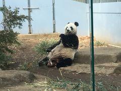 2019ジャイアントパンダ鑑賞記録 やっと仙女ママのお顔を正面から拝見出来ました☆上野動物園  ついでに上野ぼたん苑で冬ぼたんを愛でる&アメ横でチャイナ気分を味わうなど