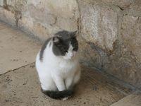 クロアチアの猫ちゃんだけをまとめました