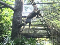 シンガポール動物園へ
